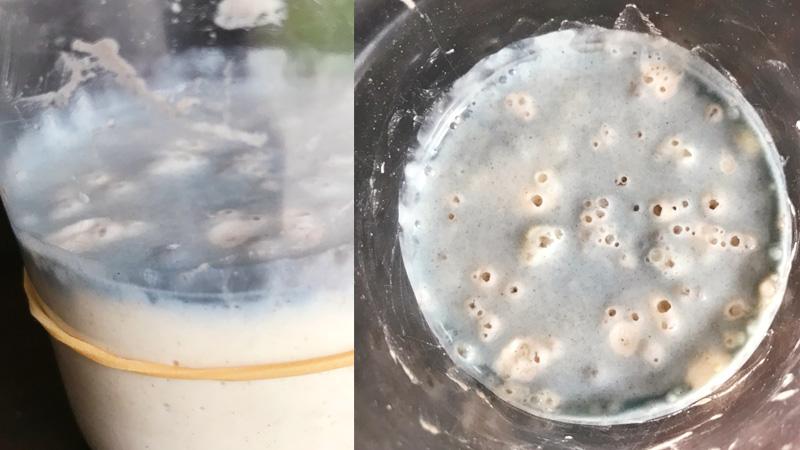 masa madre como hacer sourdough